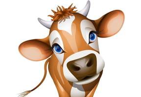 As-tu vu la vache