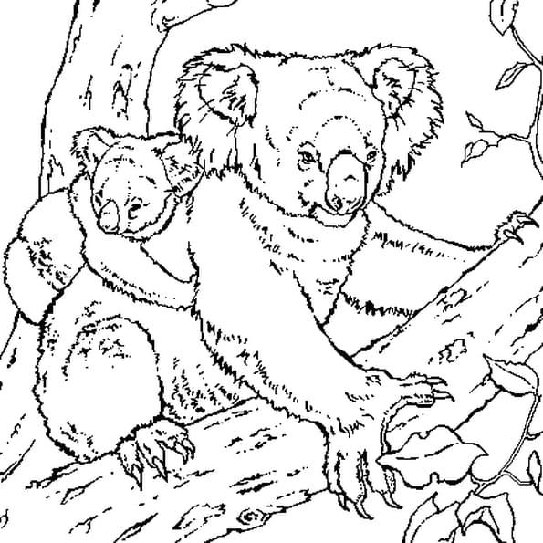 Dessin Koala a colorier