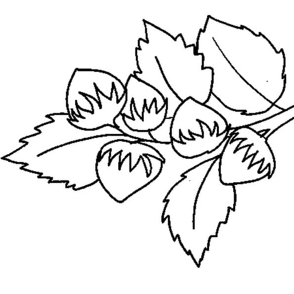 Noisette coloriage noisette en ligne gratuit a imprimer - Dessin noisette ...