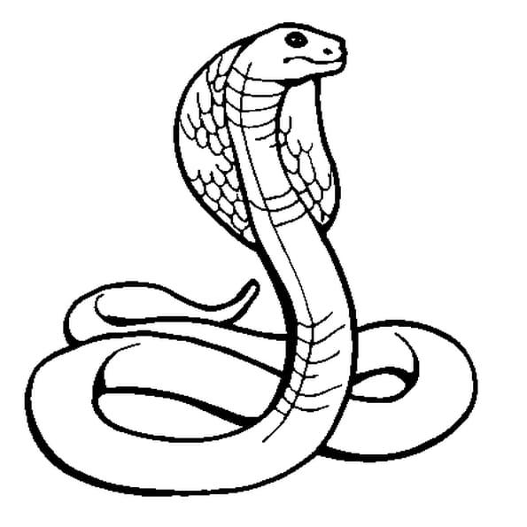 Coloriage Cobra en Ligne Gratuit à imprimer