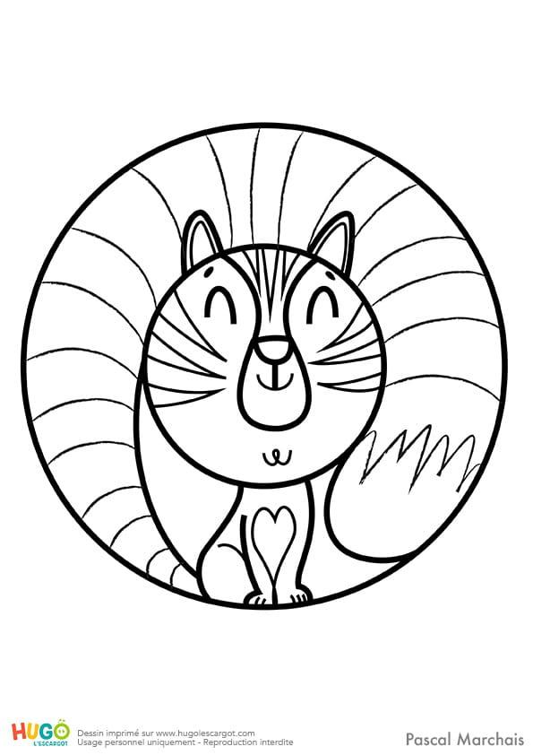 Animaux du monde, le petit chat