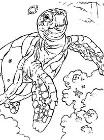 Tortue Mer