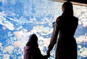 Aquarium de Paris : la vie aquatique en spectacle