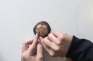Etape 2: les formes de la carapace