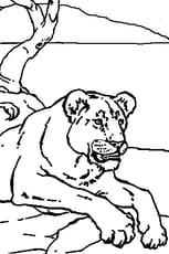 Coloriage Lionne au repos