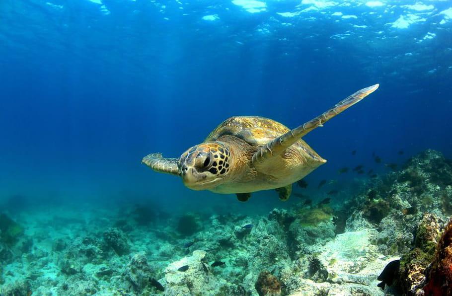 Pourquoi une journée mondiale des océans?