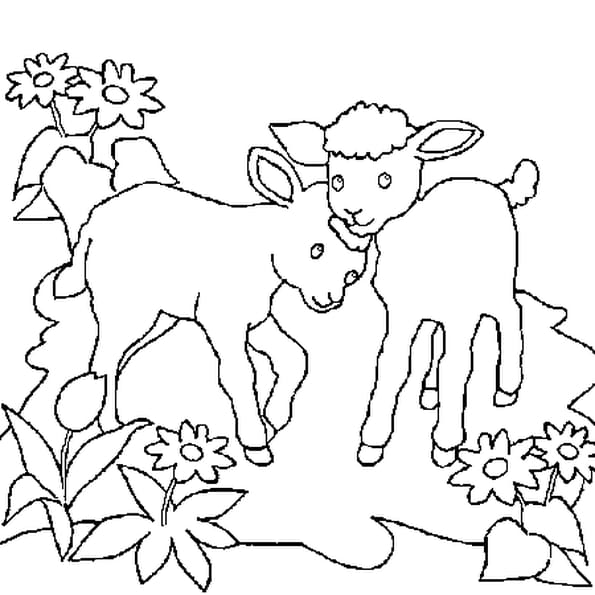 Dessin moutons a colorier