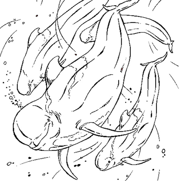 Dessin Baleine pilote a colorier