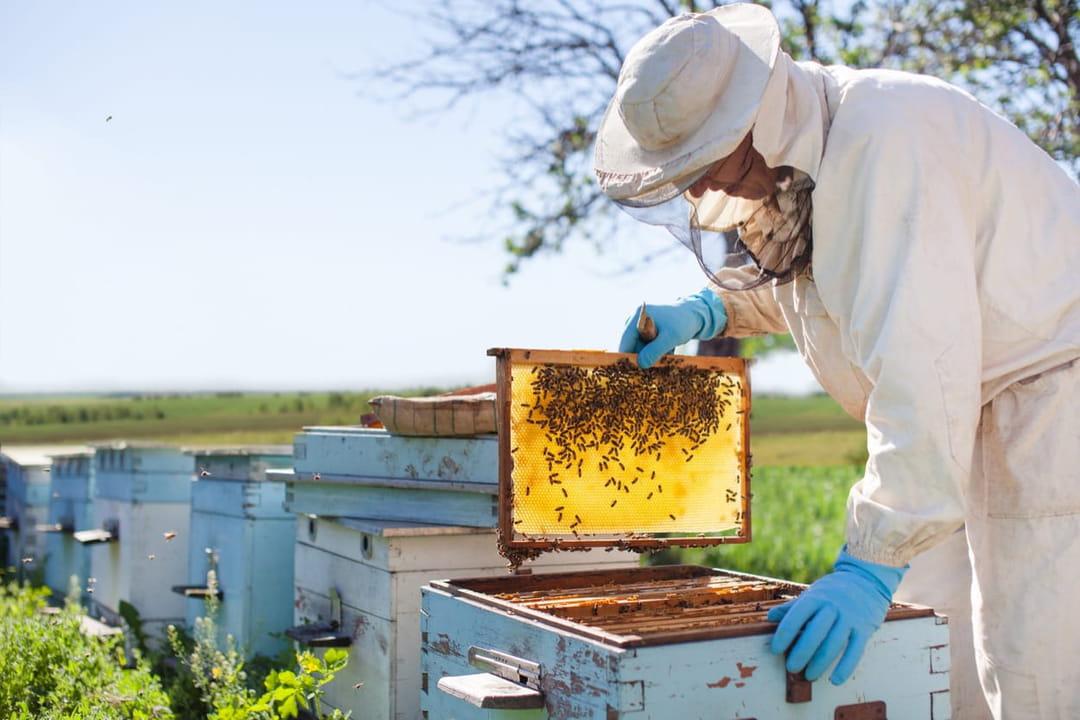 apiculteur-recoltant-du-miel-dans-un-ruche