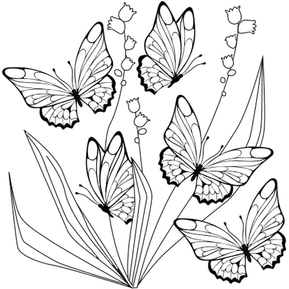 dessin papillon et muguet a colorier