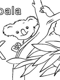 K comme Koala