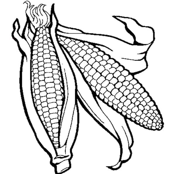 Dessin Maïs a colorier