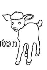 M comme Mouton