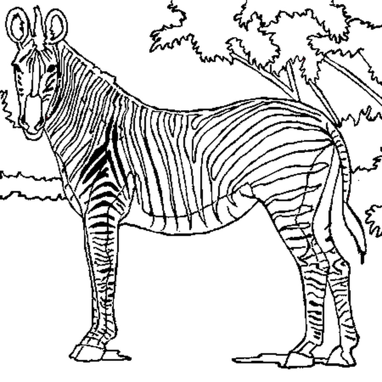 Coloriage Zebre Qui Te Regarde En Ligne Gratuit A Imprimer