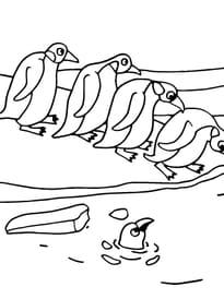 Dessin Pingouin