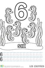 Chiffre6, les hippocampes