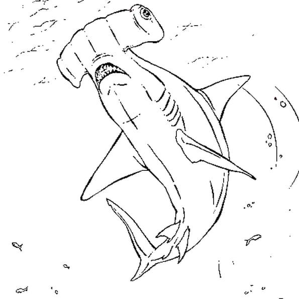 Dessin Requin marteau a colorier