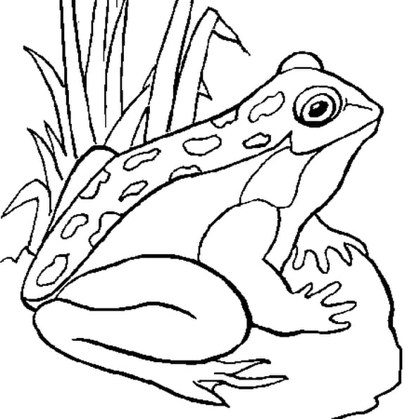 Dessin grenouille a colorier