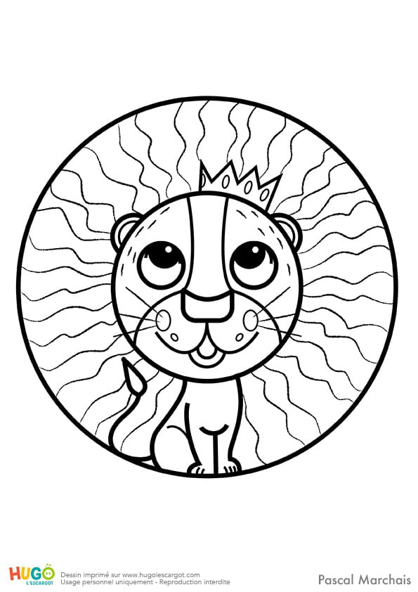 Animaux du monde, le petit lion