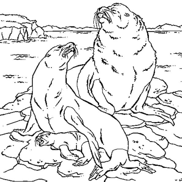 Dessin Lion de mer a colorier