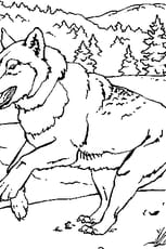 Coloriage Un loup dans la neige en Ligne Gratuit à imprimer