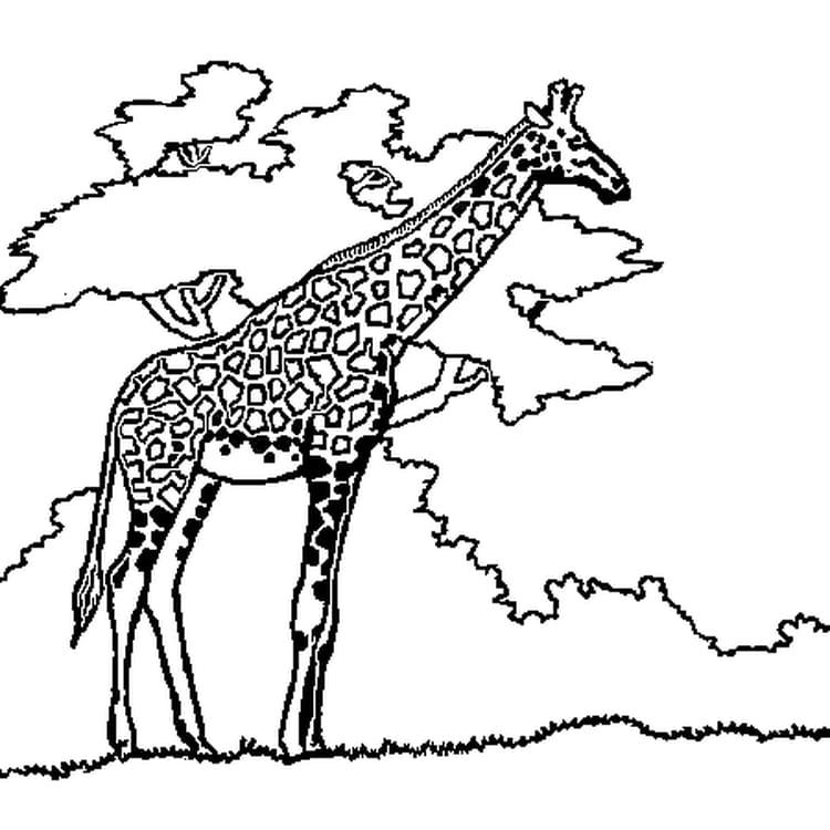 Super Coloriage girafe en Ligne Gratuit à imprimer GV97