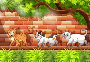1,2,3Trois petits chats