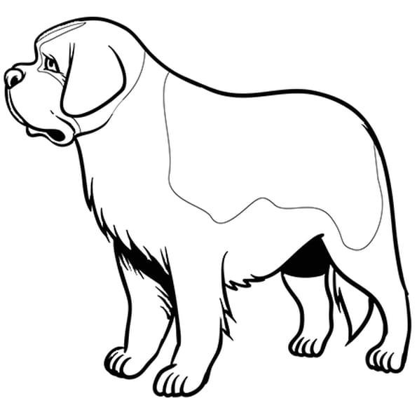 Coloriage chien saint bernard en ligne gratuit imprimer - Dessin chien facile ...