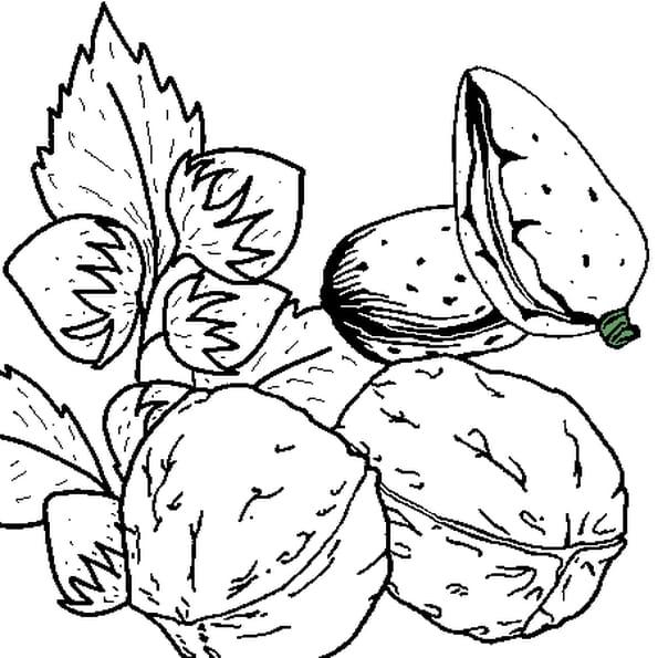 Dessin Fruits secs a colorier