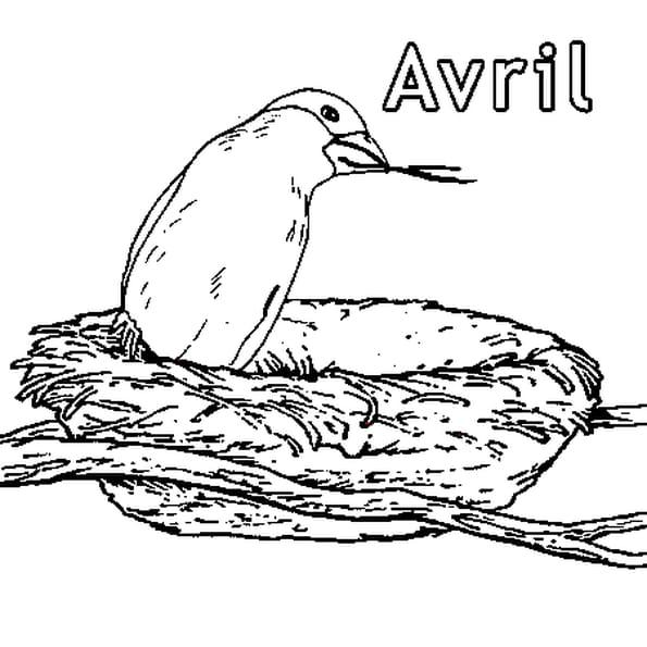 Mois d 39 avril coloriage mois d 39 avril en ligne gratuit a - Coloriage mois d avril ...