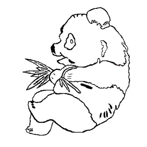 Coloriage Jeune panda avec branchages en Ligne Gratuit à ...