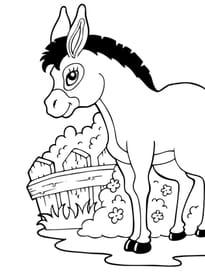 Le petit âne de la ferme