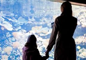 Aquarium de Paris: la vie aquatique en spectacle