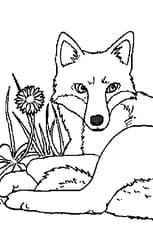 Coloriage Renard couché dans l'herbe en Ligne Gratuit à imprimer
