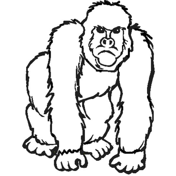 Dessin gorille 2 a colorier