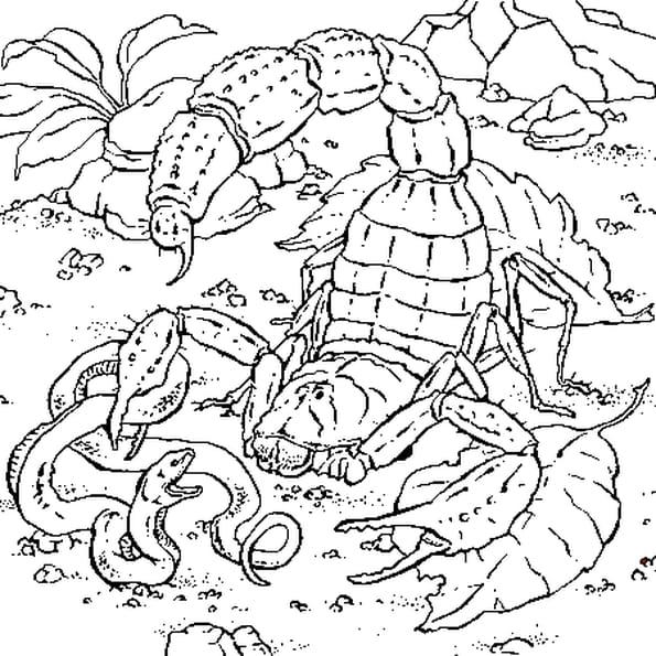 Dessin de Scorpion a colorier
