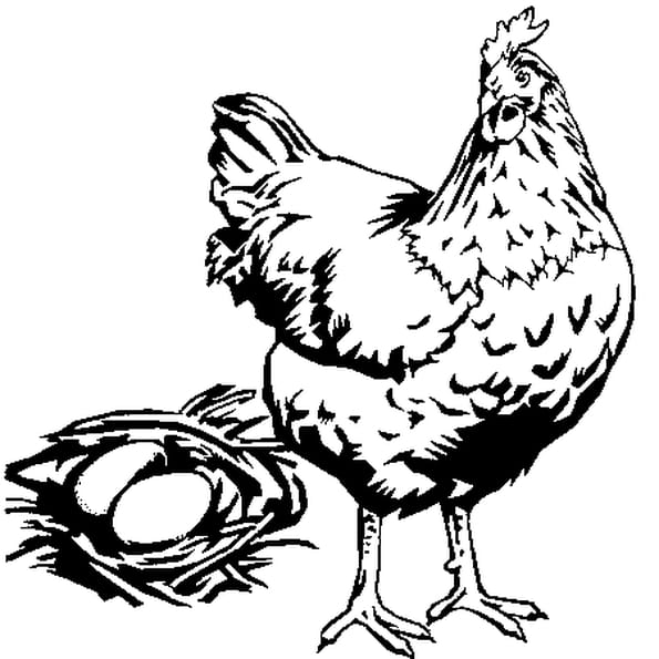 Coloriage Poule Et Oeufs En Ligne Gratuit à Imprimer