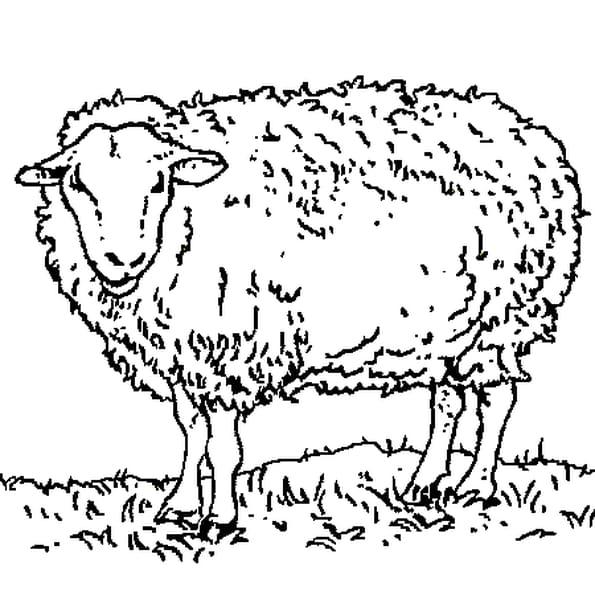 Dessin mouton a colorier