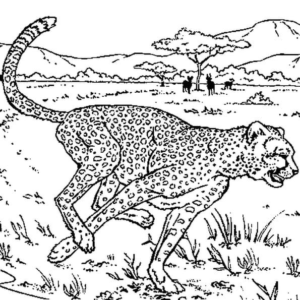Dessin guépard a colorier