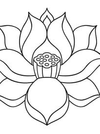 Fleur de lotus zen