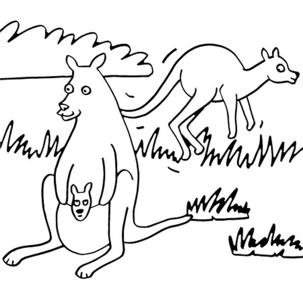 Coloriage dessin kangourou en ligne gratuit imprimer - Kangourou dessin ...