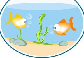 Petit poisson qui tourne en rond