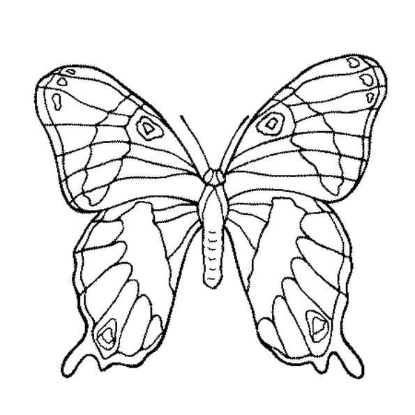 Coloriage Joli Papillon en Ligne Gratuit à imprimer