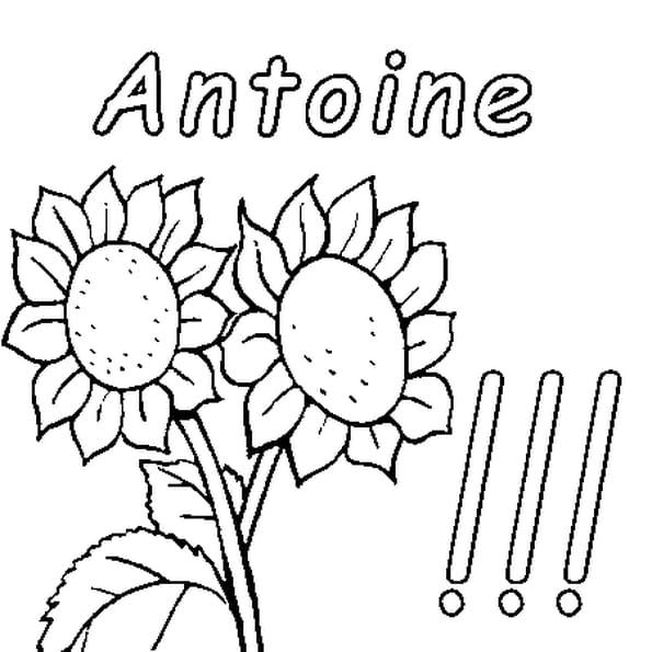 Dessin Antoine a colorier