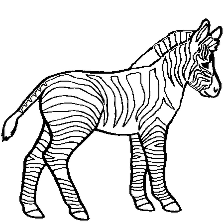 Coloriage Petit Zebre En Ligne Gratuit A Imprimer