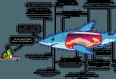 Le requin, un poisson étonnant!