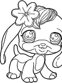 Pet Shop Tous Les Articles Hugo L Escargot