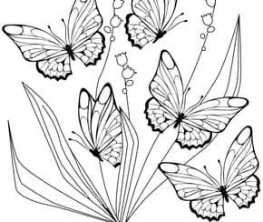 papillon et muguet