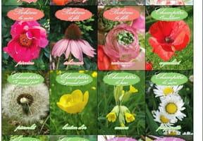 Jeu des 7familles des fleurs