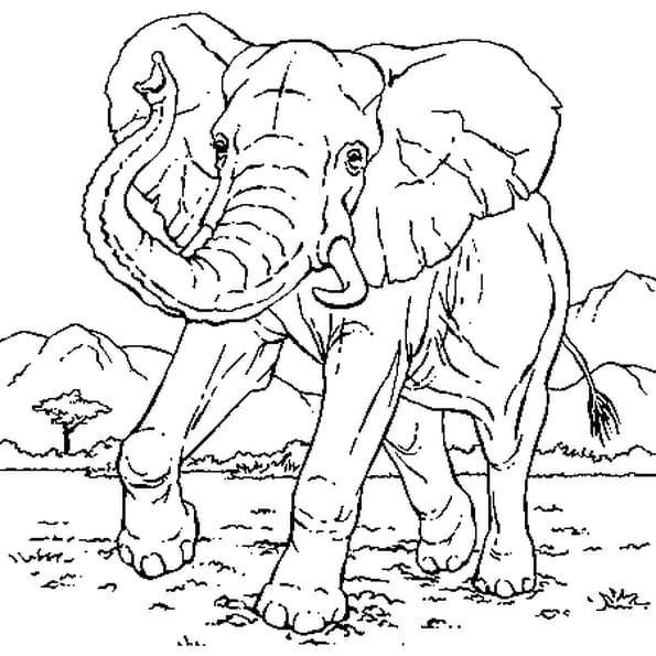 Coloriage Eléphant en Ligne Gratuit à imprimer